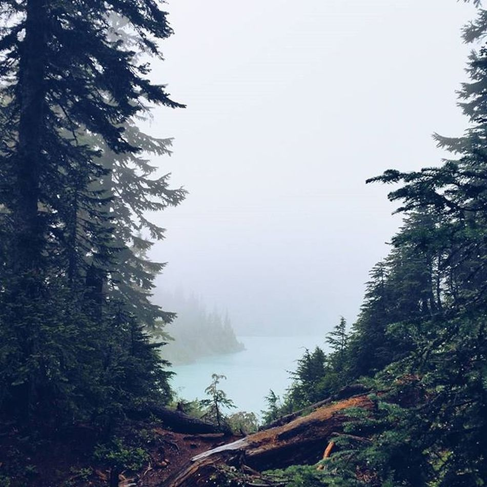 one more from this weekend. it was so magical. the fog, the color of the lake, the way the lake peaks out at you at the top of the trail. it'll take your breath away. or maybe that was from the tough hike up || Blancalake Nature Hiking PNW northwestisbest northwestadventure vscocam weberinthewild