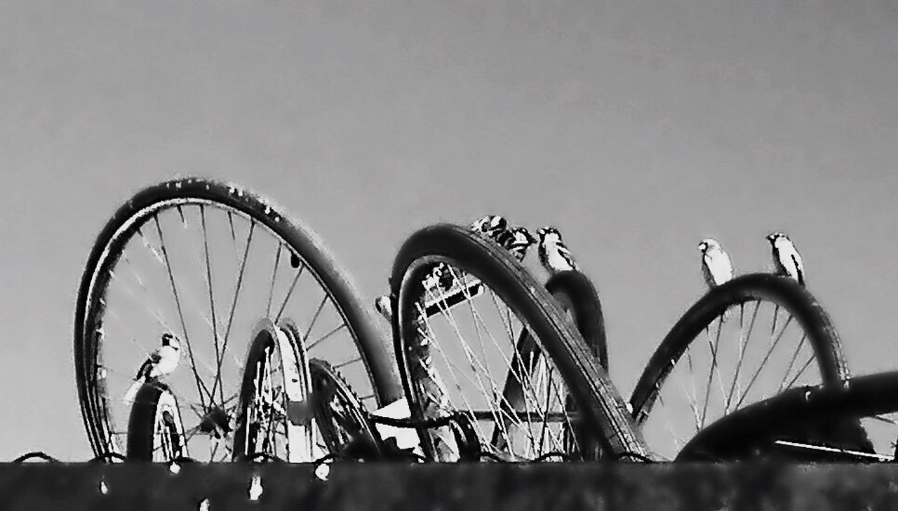 Celebrate Your Ride Birds resting and watching on top of used bikes on top of a trailer in an open market in Donna TX Ip6s+ Iphonephotography Bicycles Openmarket Black And White