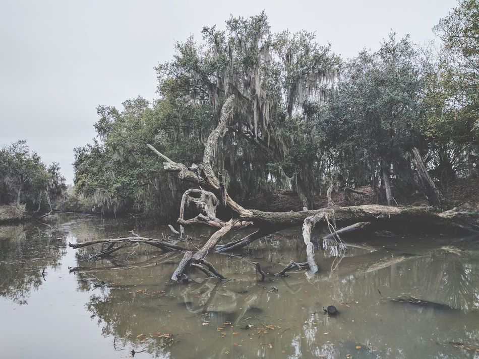 Tree Nature Water Lake No People Outdoors Branch Beauty In Nature Landscape Scenics Extreme Weather Tranquility Sky Day Louisiana Swamp Swamplife Swamp Life Swamp, Marshland, Bog, Peat Bog, Muskeg, Swampland, Morass, Mire, Moor Swamp Photos Bayou Bayous Of Louisianna Bayou View Bayou Life Louisiana Swamp