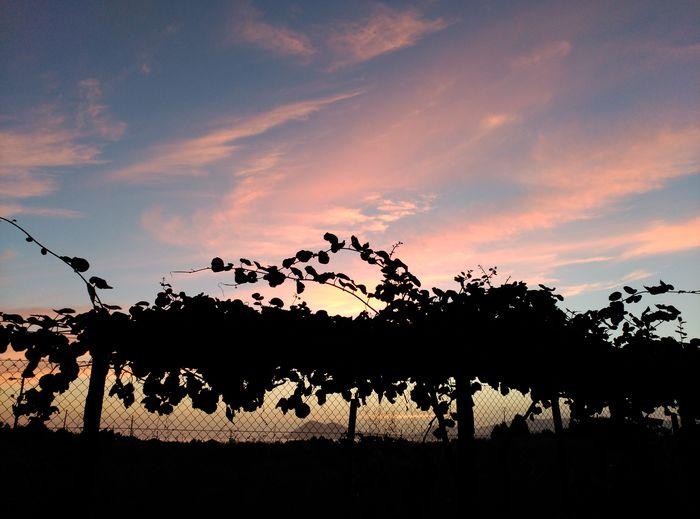 No Edit/no Filter Galicia Porto Do Son Anochecer Diadelafotografia Cielo Y Nubes  Sky And Clouds