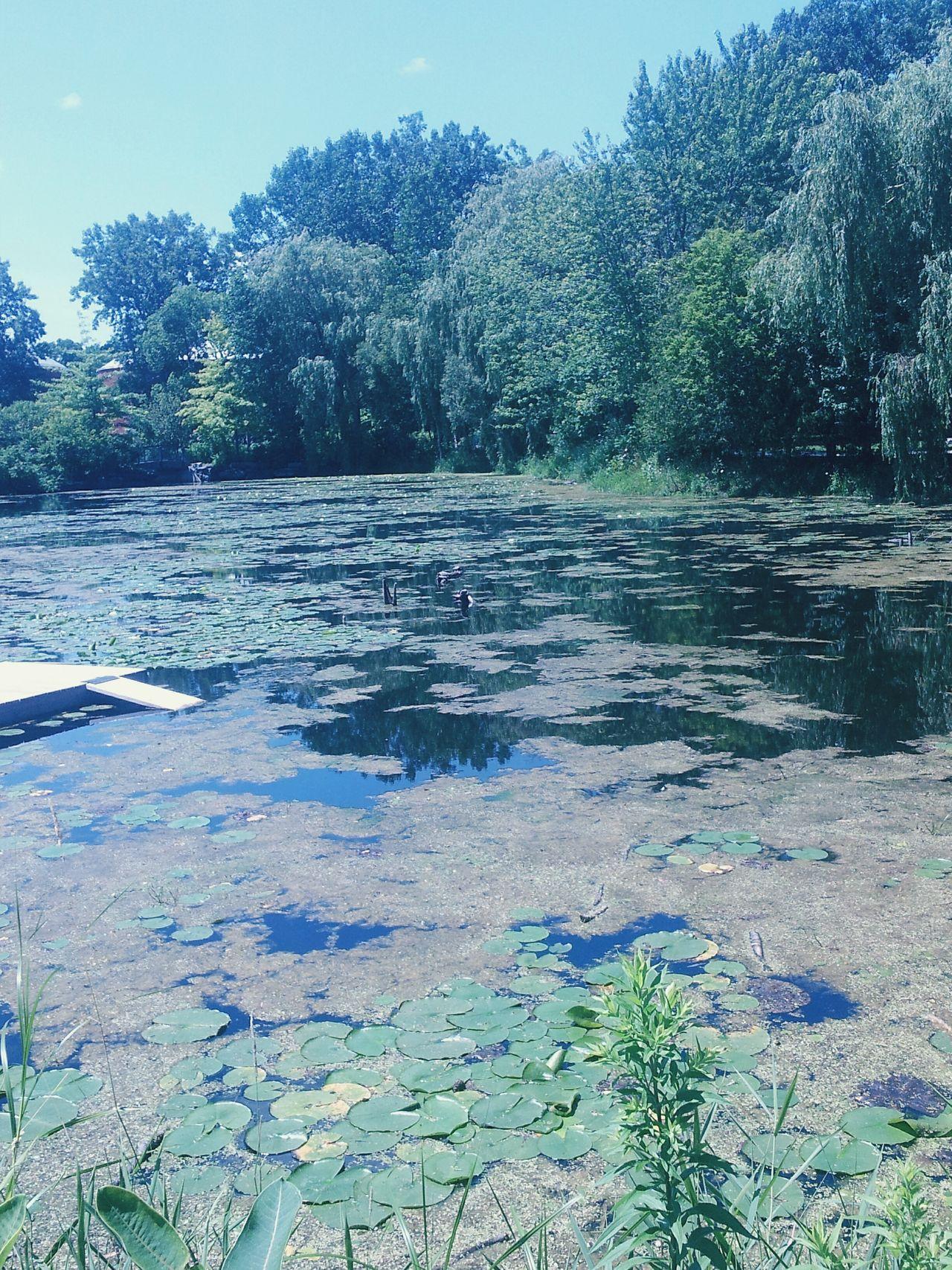 Turtle Pond Taking Photos Enjoying Life The Great Outdoors - 2017 EyeEm Awards