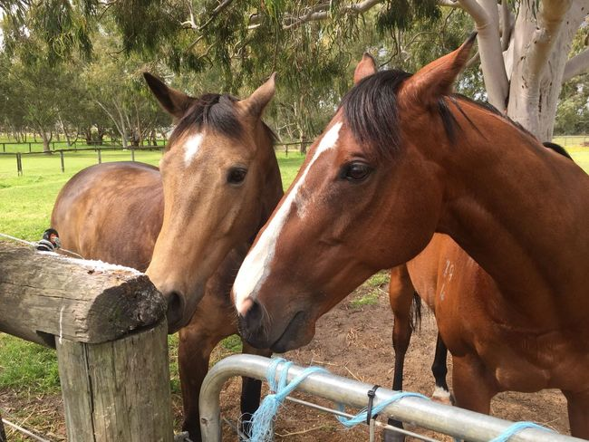 Horses Two Animals Paddock Outdoors Friends ❤ Best Friends