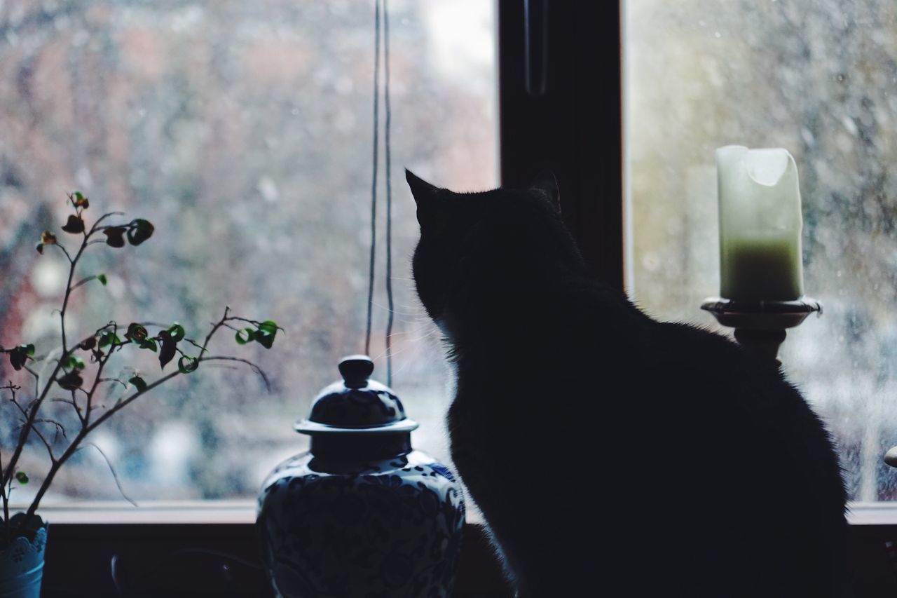 Cat Window Snow Home Interior Domestic Cat Pets One Animal Animal Themes Indoors  Day Winter Window View Winter Wonderland Wintertime Cold Days Home Home Sweet Home Cats Of EyeEm Real Photography VSCO Weather Domestic Animals Indoor Photography Looking Through Window