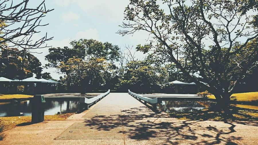 Peaceful place Tree The Way Forward Walkway Park Outdoors Scenics Nature Day First Eyeem Photo