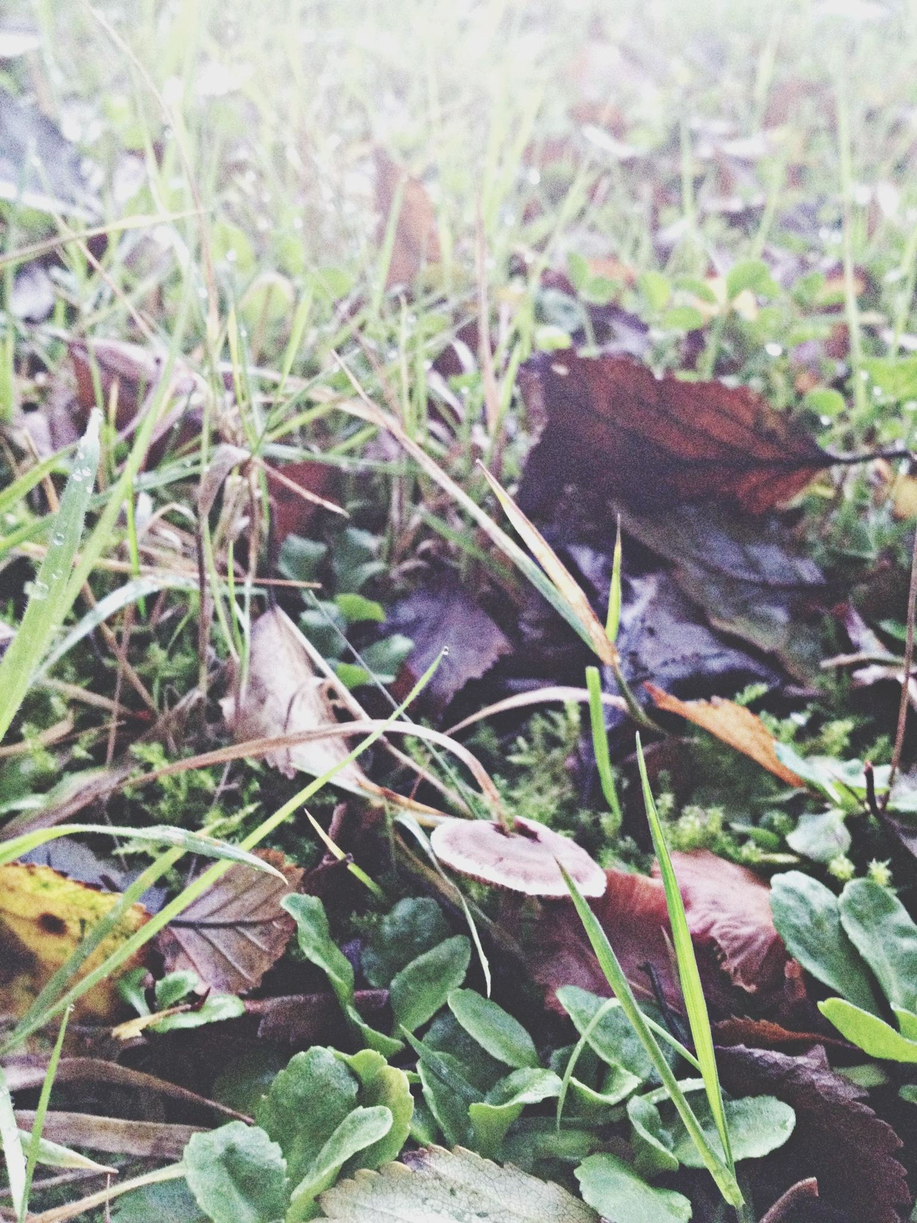 grass, growth, field, leaf, close-up, nature, plant, green color, high angle view, fragility, day, ground, mushroom, selective focus, outdoors, growing, focus on foreground, dry, grassy, no people