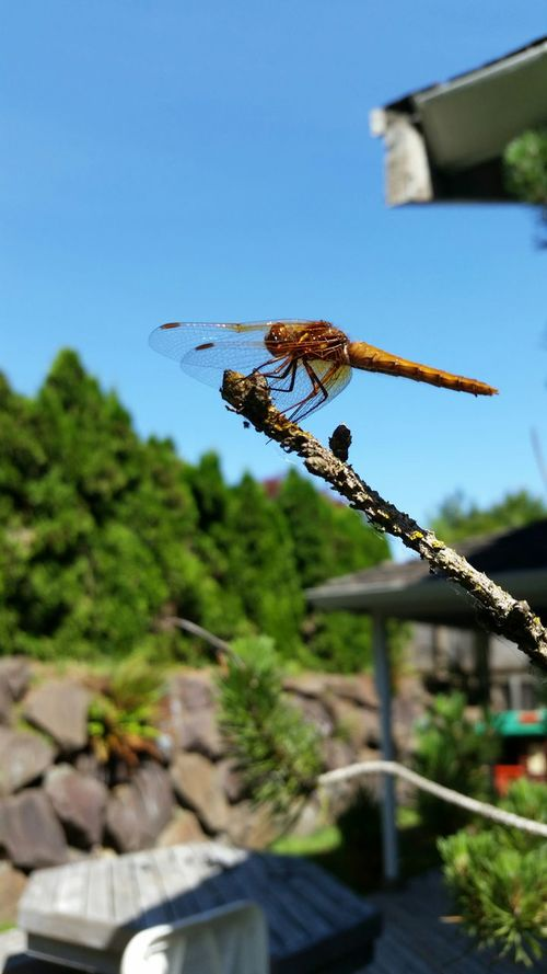 This guy liked me taking his picture. Pretty cool. Enjoying The Sun Bugs Dragonfly