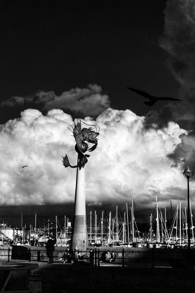 Sky Cloud - Sky Outdoors Day Plymouth Devon Freshness Sculpture Fish Prawn Black & White Plymouthbarbican Blackandwhite Photography Silhouette Birds Birds_collection