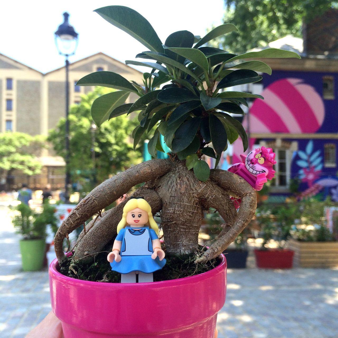 Fleurpageons Les rhododendroves Gyraient et gygemblaient dans les vabes On frimait vers les pétunias et les momerates embradent ». Alice Aliceinwonderland Alice Au Pays Des Merveilles