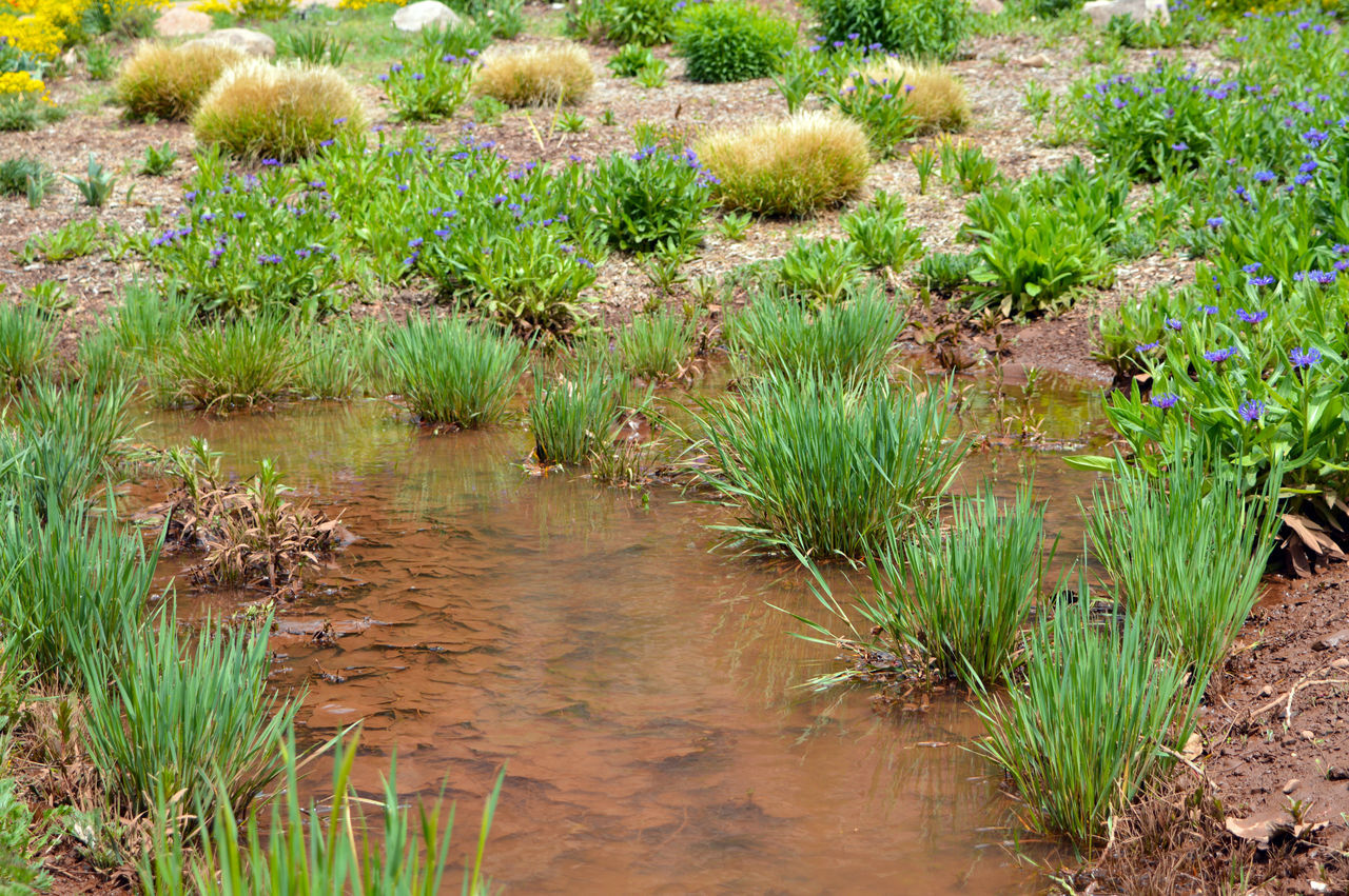 Cute Stream Flowers,Plants & Garden Green Color Growth Leaf Litter Nature Rocky Mountains USA Stream Water Water Plants