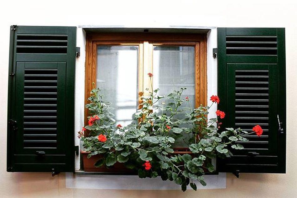 Rosanna's window.. Throwback to Genoa .... Italy Italia Genova Pegli