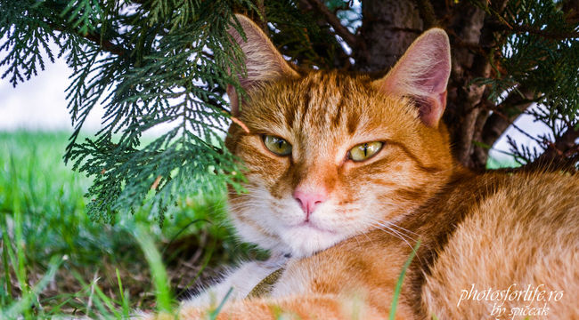 garfield the cat Beauty In Nature Cat Close-up Day Domestic Animals Domestic Cat Focus On Foreground Green Color Growth Mammal Nature No People One Animal Outdoors Pets Plant Whisker
