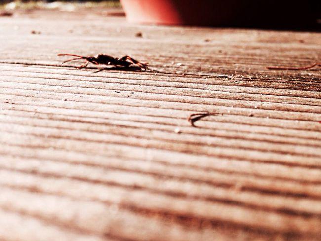 Insects  Wood Pictureoftheday Amazing combattendo la fobia per gli insetti