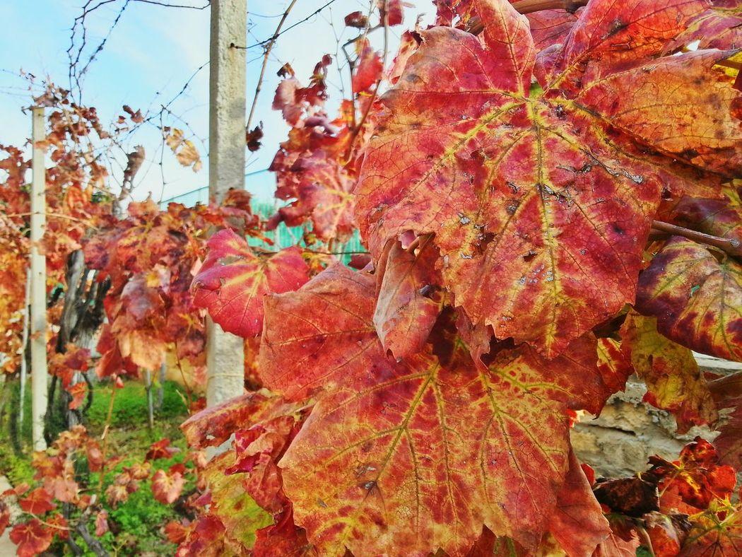 Autumn Colors Autumn Leaves Naturecolor Nature Beautiful Nature Perfectnature Fullcolor