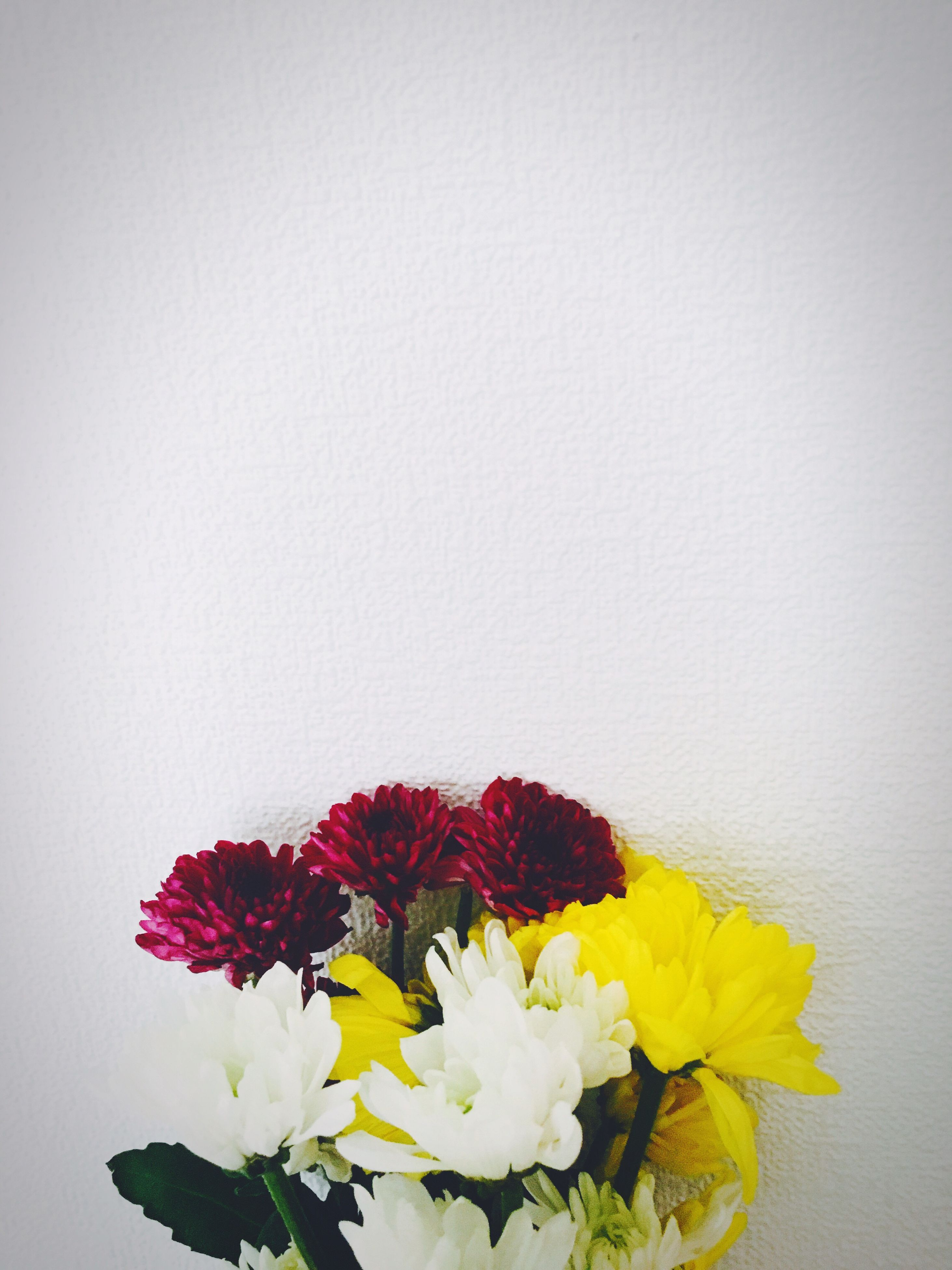 flower, petal, freshness, fragility, flower head, studio shot, copy space, beauty in nature, white background, yellow, wall - building feature, nature, indoors, plant, growth, close-up, stem, blooming, vase, white color
