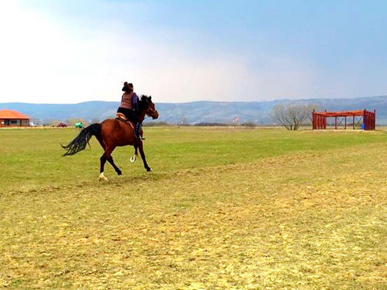 Equestrian Horsebackriding  Holstein Galopp Loveitt Rider