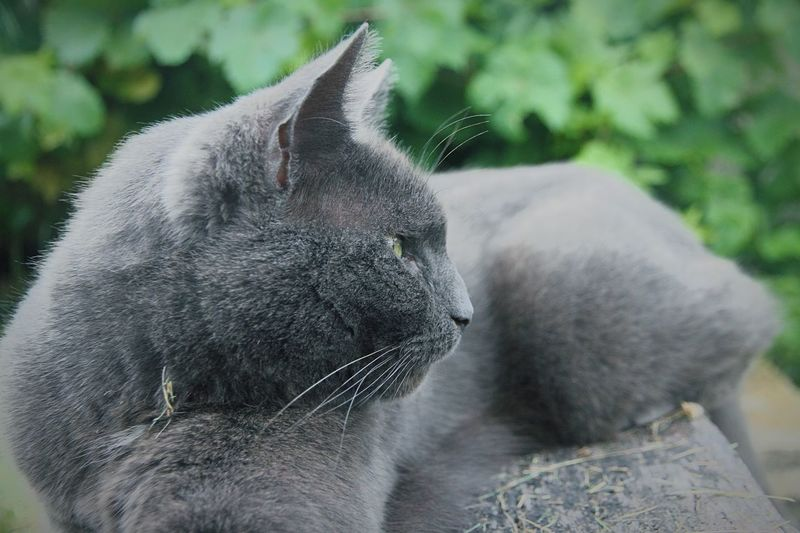 Taken in my garden, with my very unpredictable cat. taken on a canon 5d mk1, 15-85mm. dDomestic CatpPetscClose-upaAnimalrRelaxationmManual FocusoOutdoorsUUnpredictablewWhiskerfFeline