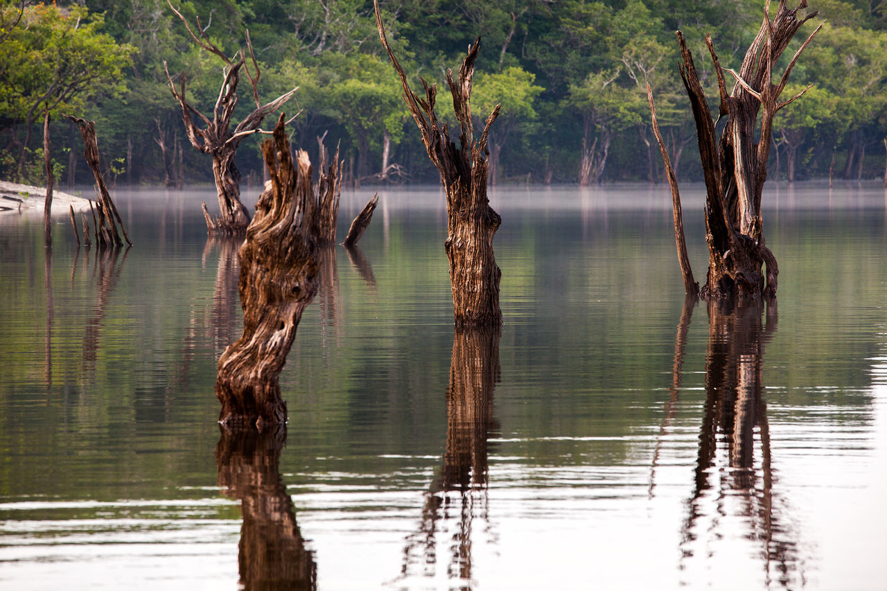 Amazon River Brazil Reflection Tranquility Travel Tree Water Reflections Amazon Beauty In Nature Branch Brazilian Forest Igapó Igarapé Jungle Lake Nature No People Outdoors River Scenics Travel Destinations Tree Tree Trunk Water