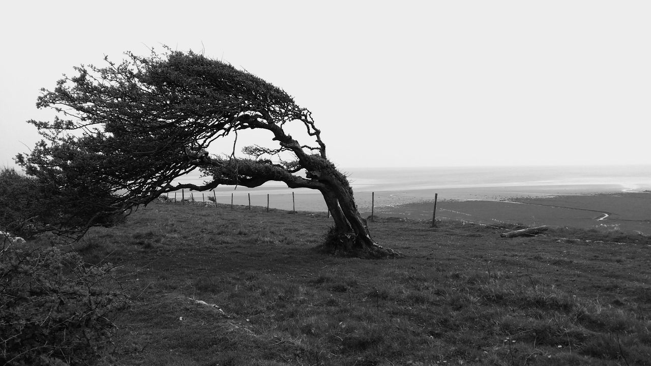Tree Windswept Tree Windswept Trees Windswept Moody Windy Blackandwhite Photography Black And White Blackandwhite Black And White Collection  Blowing Art Beautiful Countryside England Fence Lake District Grange-over-Sands Nature Natural Seaside Cliff Autumn Spooky Moody Weather