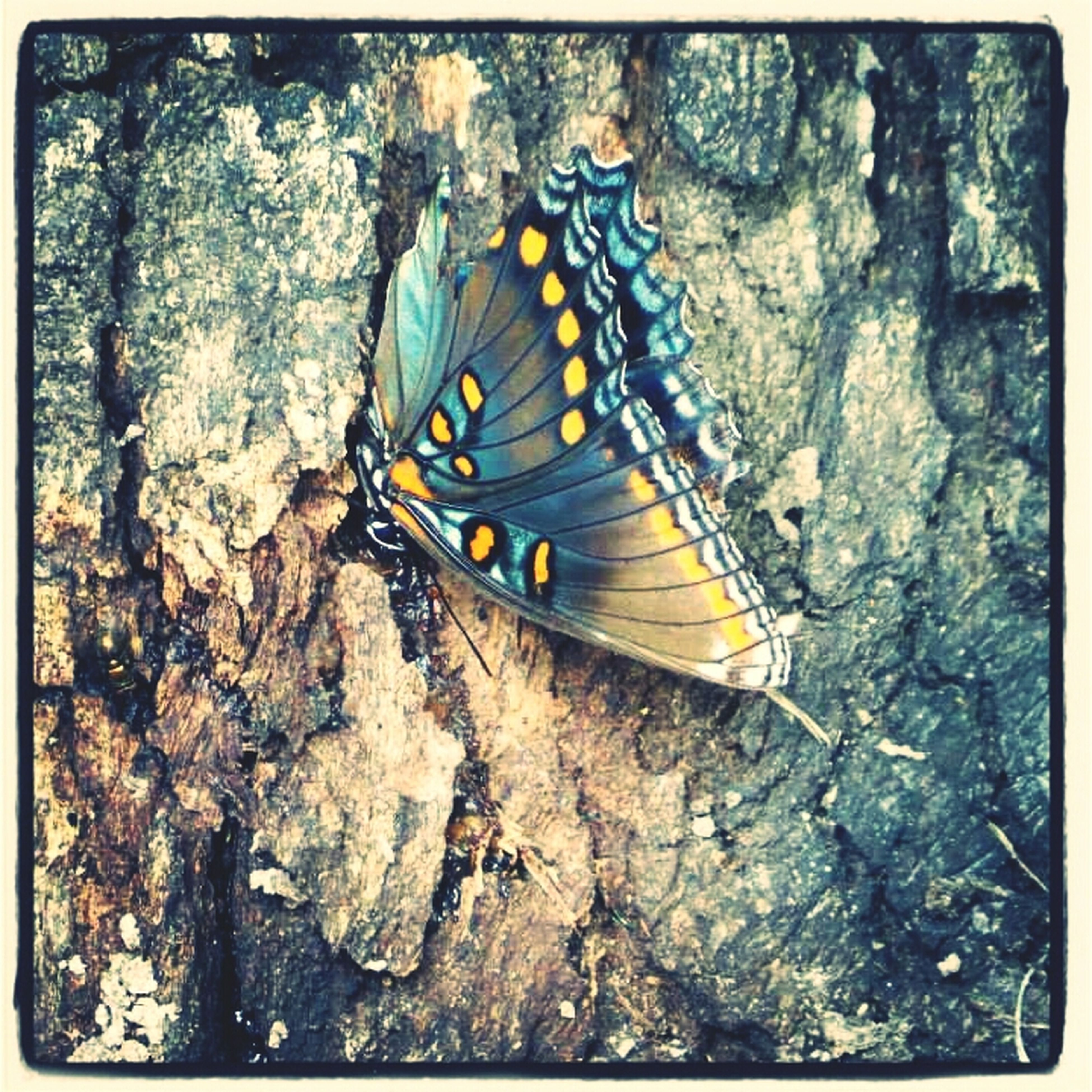 one animal, animal themes, butterfly - insect, wildlife, animals in the wild, insect, butterfly, natural pattern, transfer print, close-up, animal markings, nature, high angle view, auto post production filter, beauty in nature, outdoors, day, animal wing, no people, rock - object