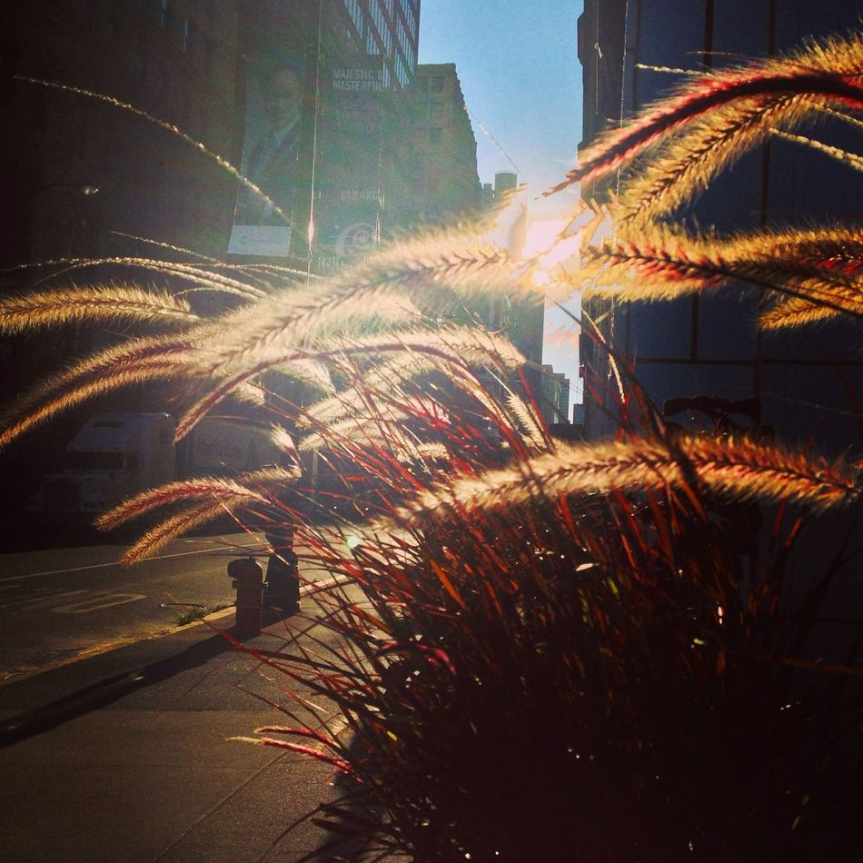 Glitch Silvergrass Streetphotography Sunset Silhouettes Walking Around The City  City View  Chicago