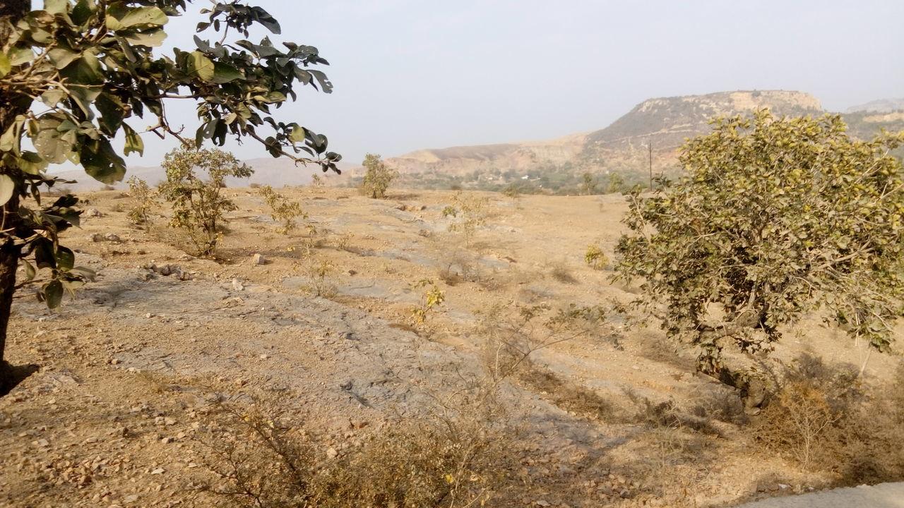 Animal Themes Day Jaipur Rajasthan Landscape_photography National Park Nature Photography Outdoors Ranthambore National Park Wildlife & Nature