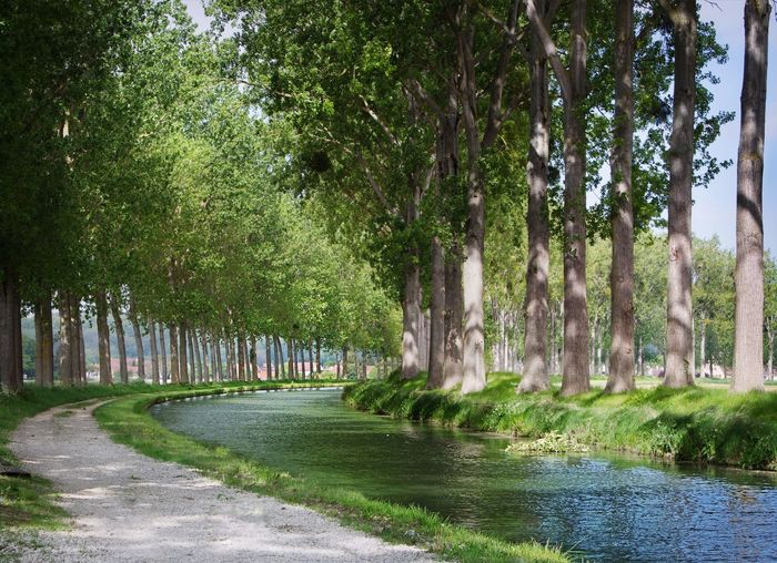 River Forest Wood Green Nature France Meaux Beauty Path