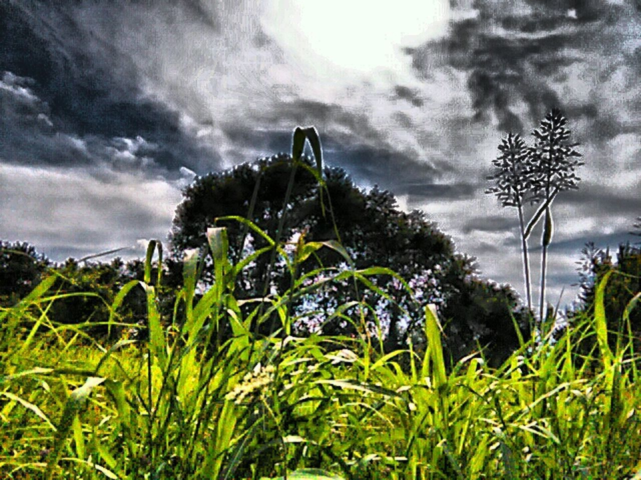 Nature Bugs View Landscapes Pointless Life Still Life Nature Is Art Eyeem Market EyeEm United States Of America Summer Views Showcase July Landscape EyeEm Nature Lover Nature_collection USA Photos God's Creation Nature Photography EyeEm USA  Popular HDR Beauty In Nature Eyeem Trending New On Market TRENDING  Beauty Is In The Eye Of The Beholder EyeEm Gallery
