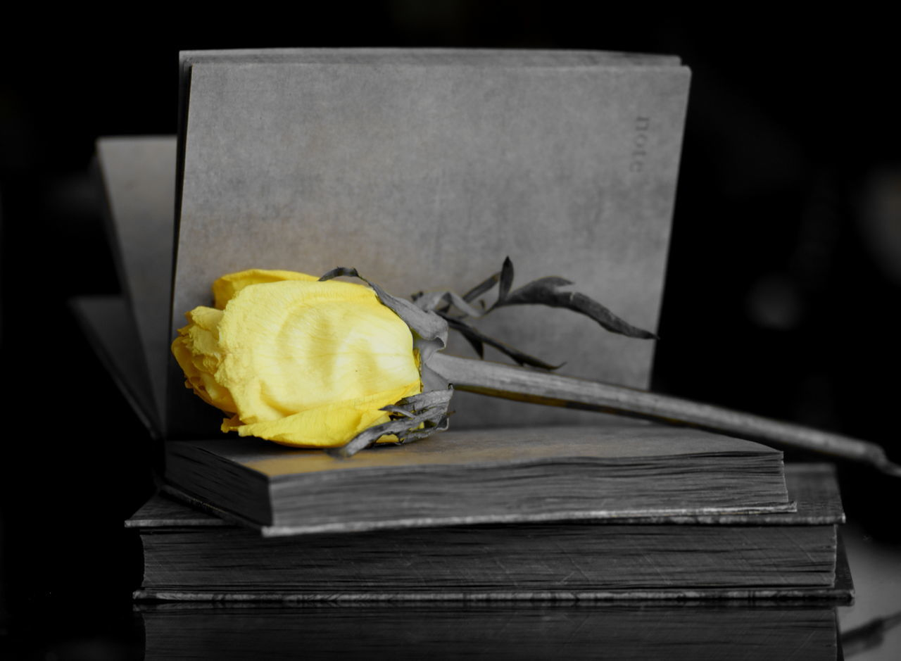 Book Book And Flower Books Library Book Notes Notes From The Underground Rosé Yellow Yellow Rose