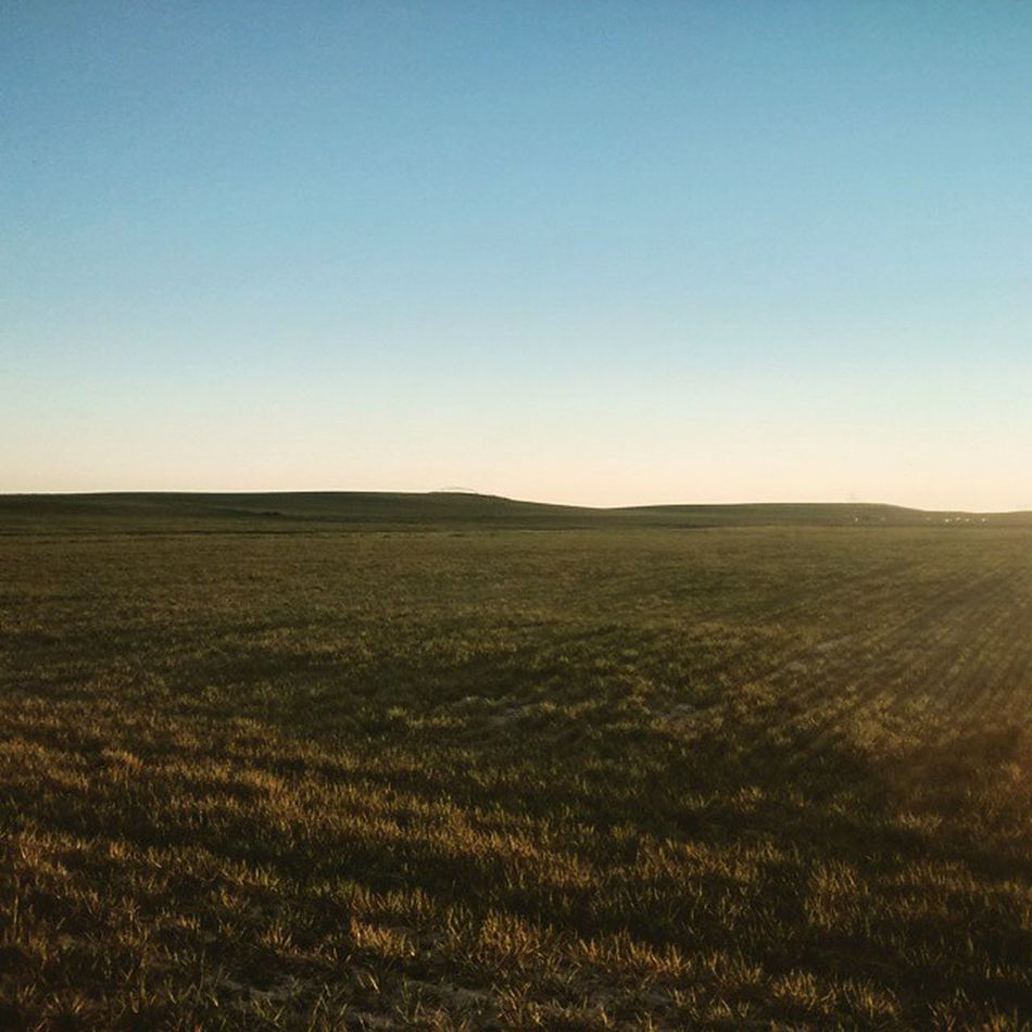Cebada Field Campo