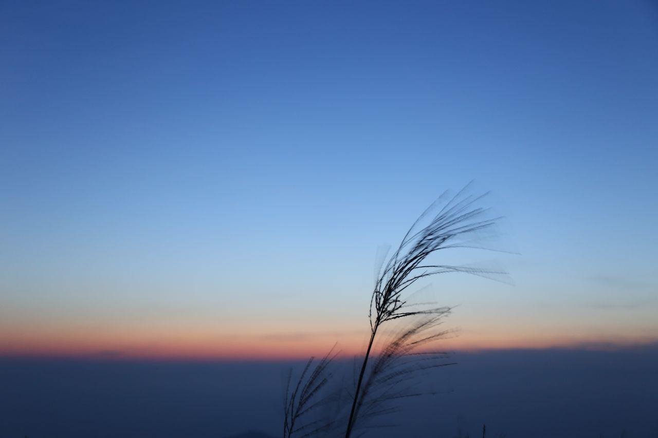Clouds Clouds And Sky Followme Hi HongKong Nature Sky Sunrise Sunrise_Collection Wildlife