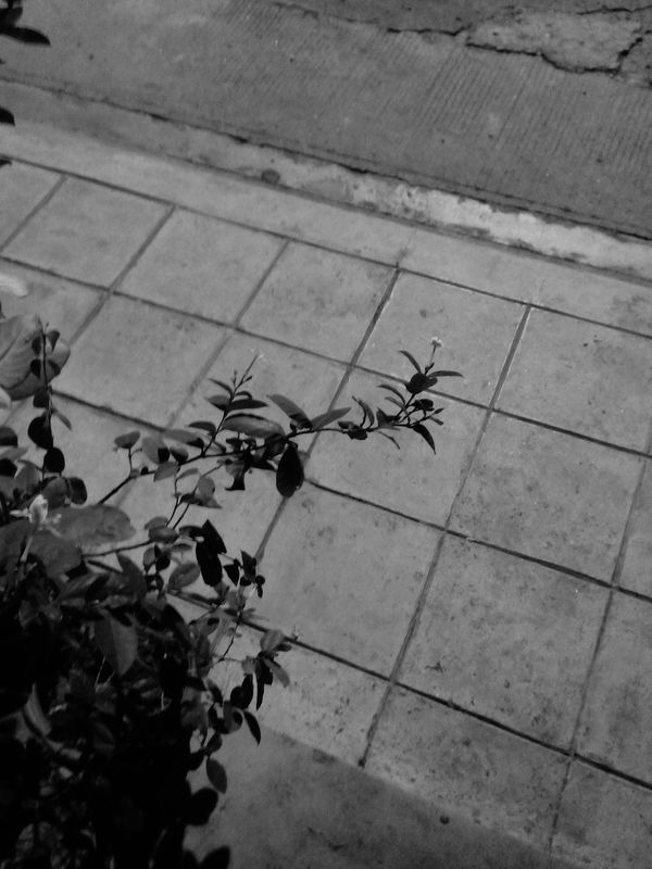 Blackandwhite Photography Flowers,Plants & Garden