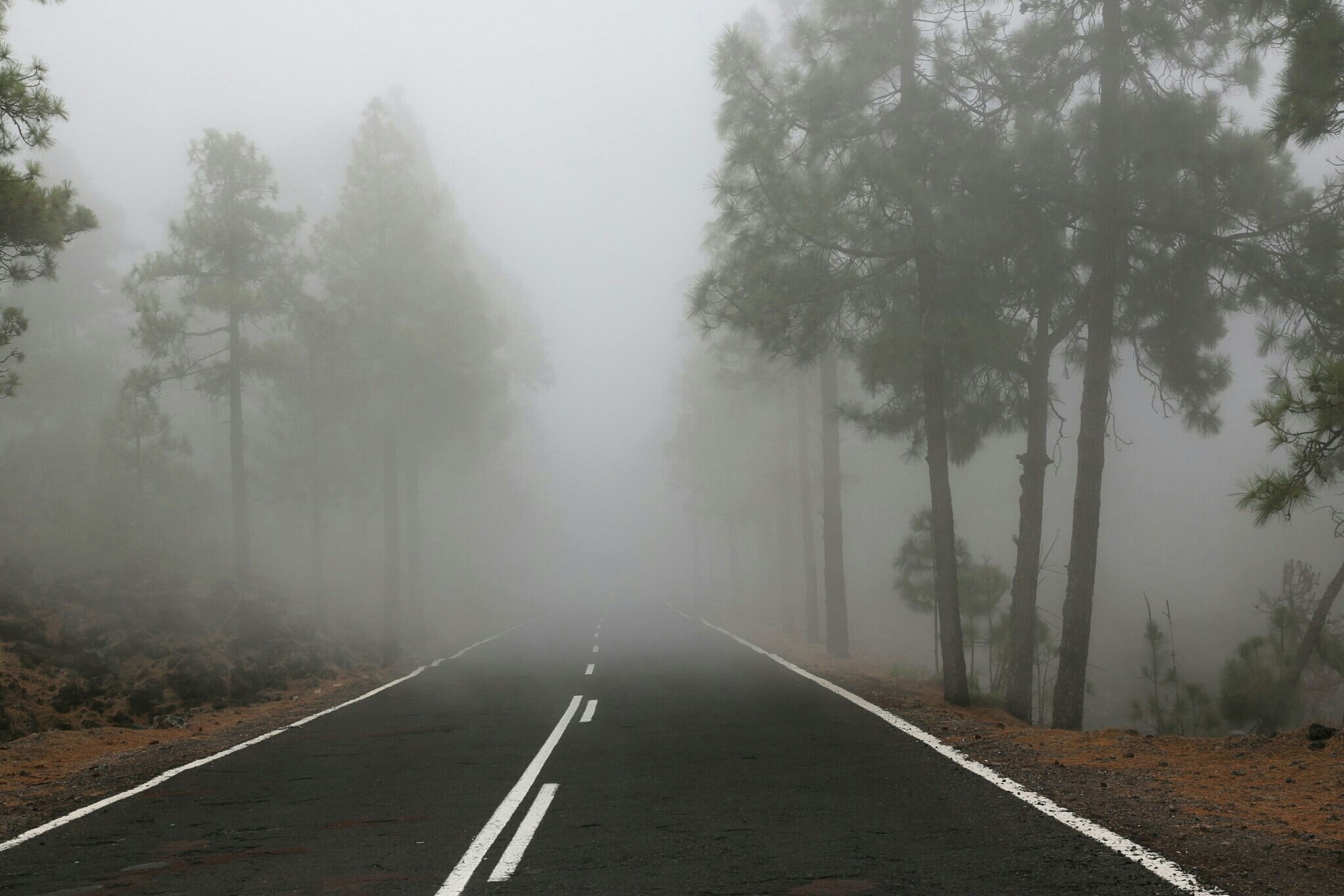 the way forward, transportation, diminishing perspective, vanishing point, road, tree, fog, empty road, tranquility, road marking, tranquil scene, country road, nature, foggy, empty, scenics, non-urban scene, sky, beauty in nature, landscape