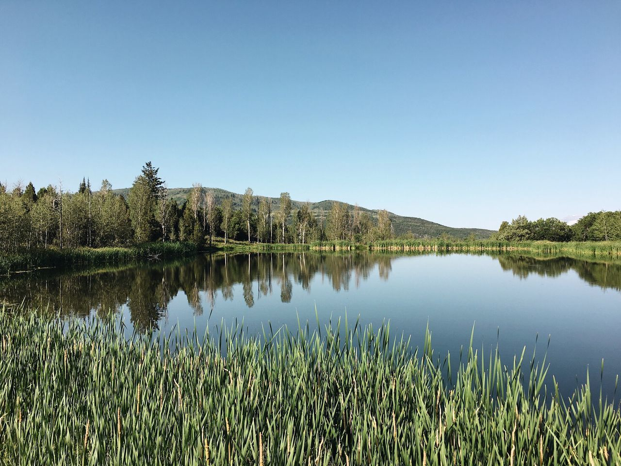 nature, reflection, grass, lake, tranquility, growth, tranquil scene, no people, beauty in nature, outdoors, water, clear sky, scenics, day, tree, sky