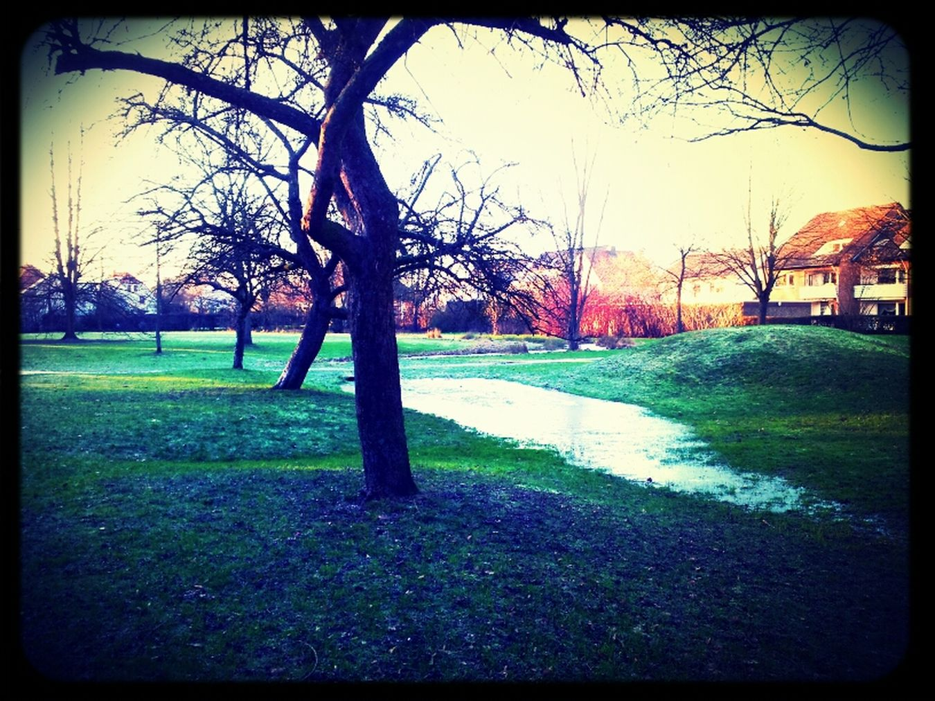 Streetphotography Nature Trees Park BTM Mvn