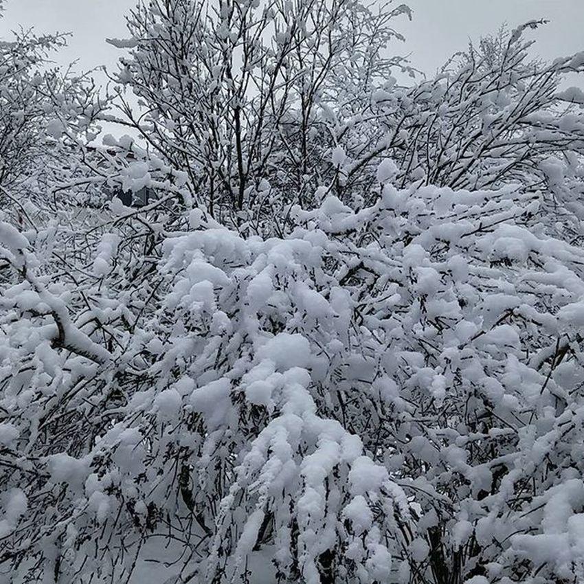 Snow Lumi Nieve Neige Winterwonderland Tampere Tamperelove Tre Muntampere Igerstampere Igersfinland Finland Suomi Ig_finland