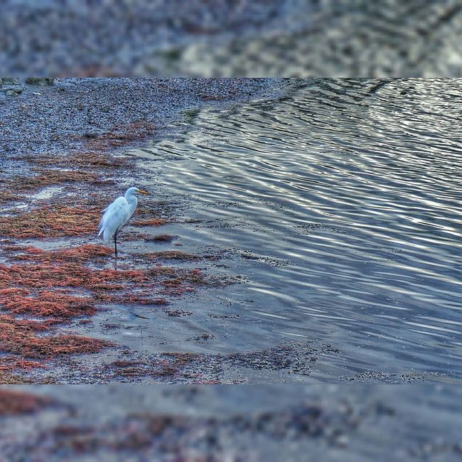 White Sea Herring Oceancreatures Birds Ocean Seaside Life Nature Peace Positivity Art