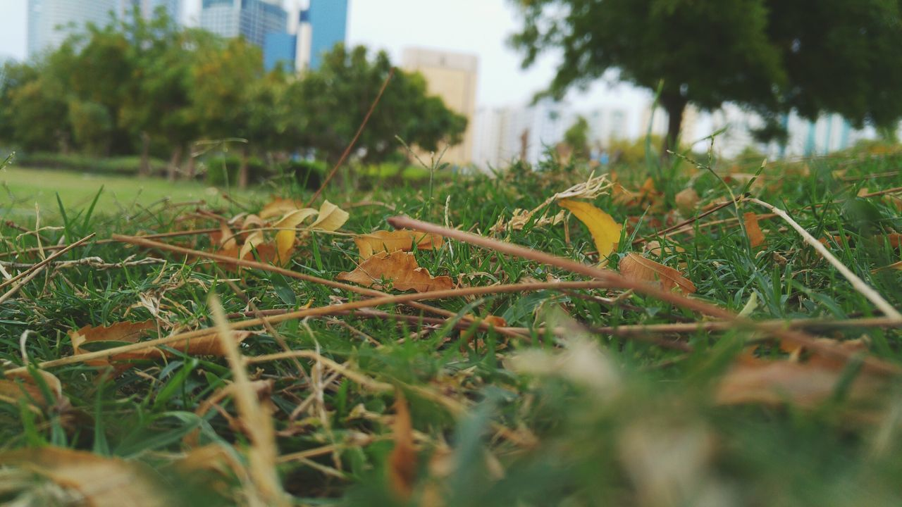 Nature From My Perspective. Camera On Grass Green Spaces In The City