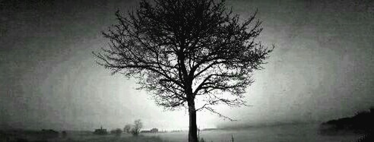 Nature Tree Tranquility No People Beauty In Nature Branch Outdoors Tree Trunk Tranquil Scene Fog Sky Day htc
