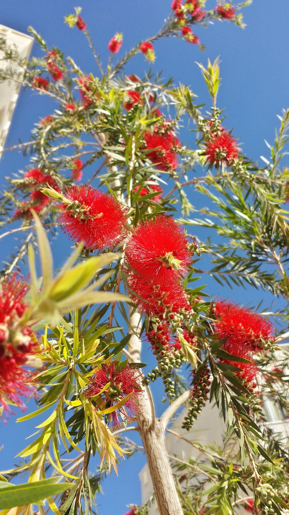 سبحانك ربي الحمد_لله Tree Growth Sky Nature Red Beauty In Nature Flower Nature Beautiful Oujda City, Morocco The Purist (no Edit, No Filter) Morocco Hugging A Tree