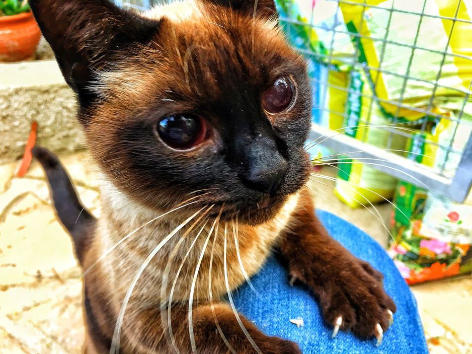 😺 Domestic Animals Cat Blind Animal Miau Eyes Fur Whisker Jeans Claws