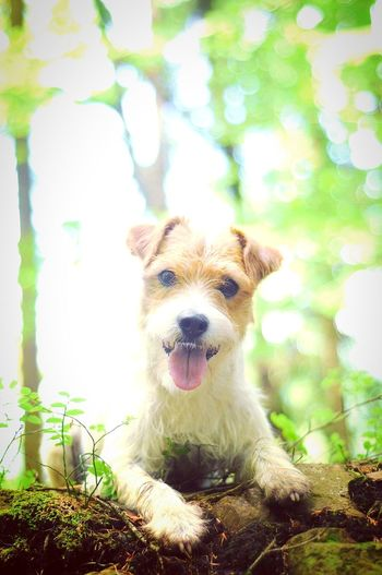 Dog Pets Animal Dogs Life Dog Photography Dog Portrait Canine Photography Dogs Of EyeEm Beauty In Nature Green Color Walk In The Woods