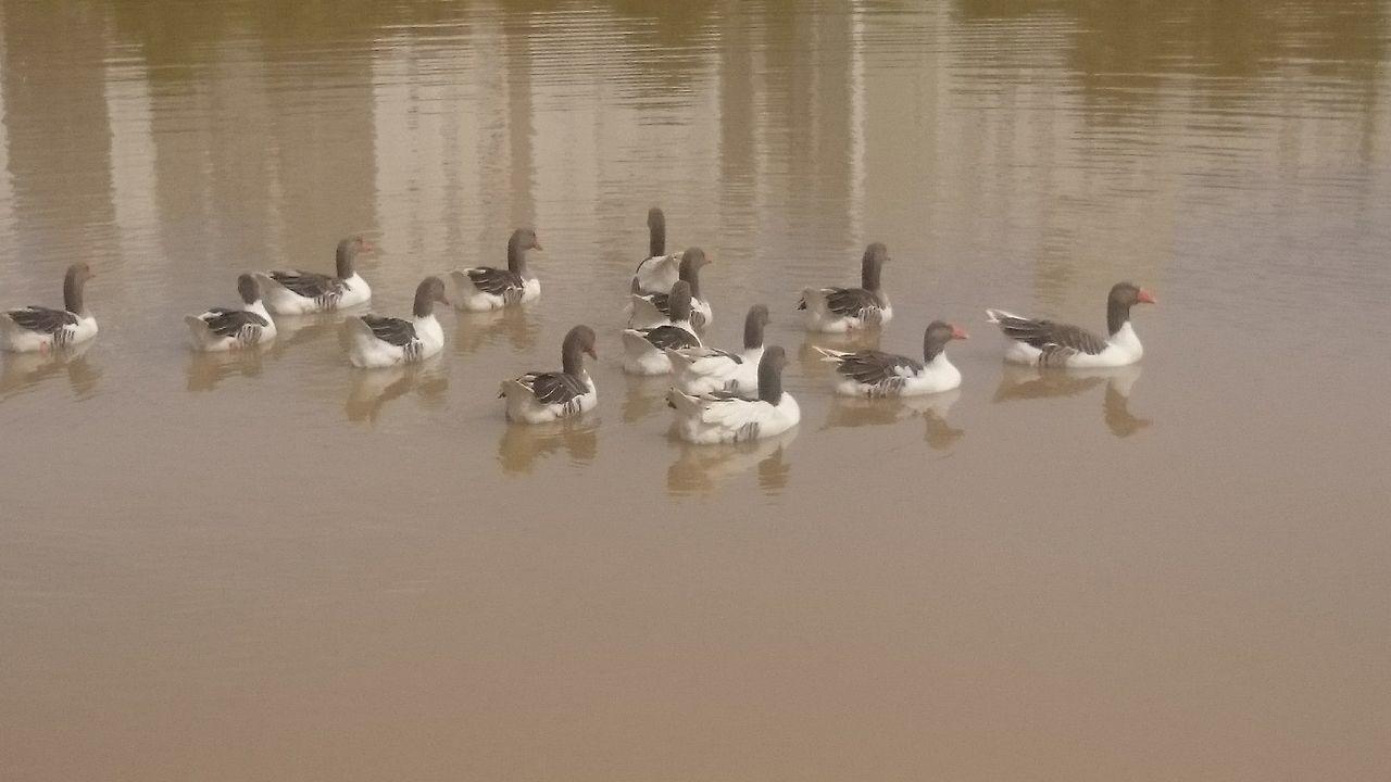 Semfiltro Ducks Parquedasaguas Campinas, São Paulo, Brasil XperiaZ1 Natureza 🐦🌳