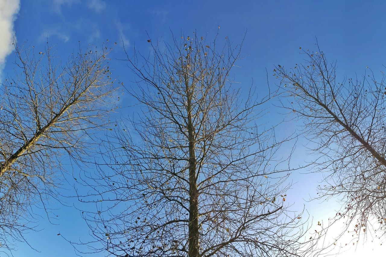 bare tree, nature, sky, branch, low angle view, tree, growth, beauty in nature, outdoors, blue, no people, day, clear sky