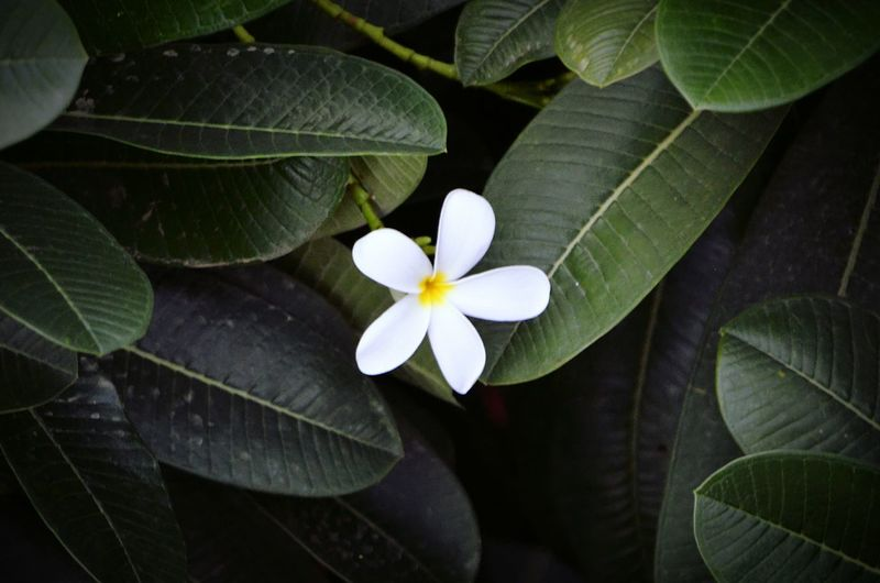 TheLoneFlower Greenleaves Check This Out