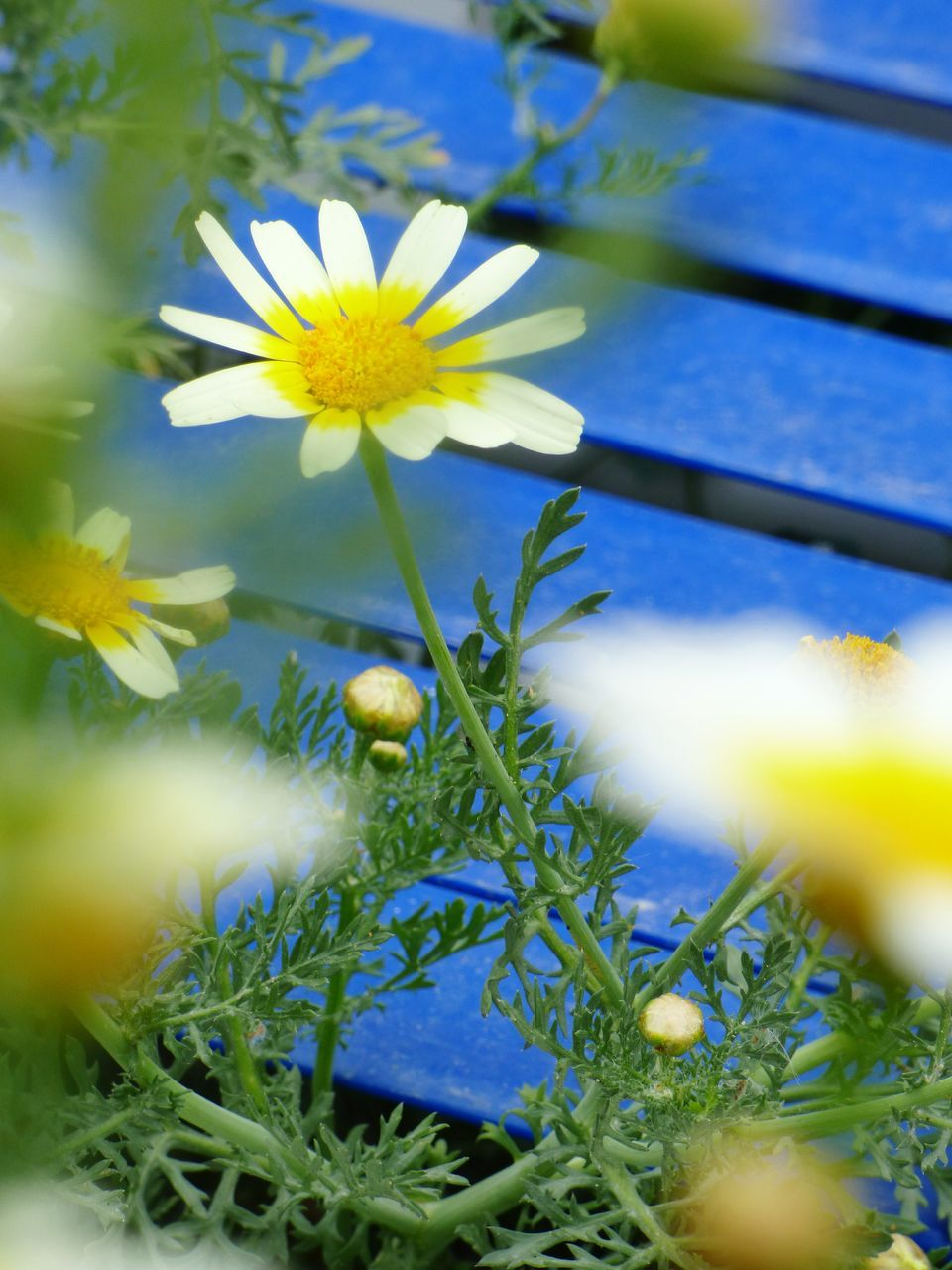 flower, growth, nature, beauty in nature, petal, yellow, fragility, freshness, plant, blooming, no people, flower head, close-up, outdoors, day