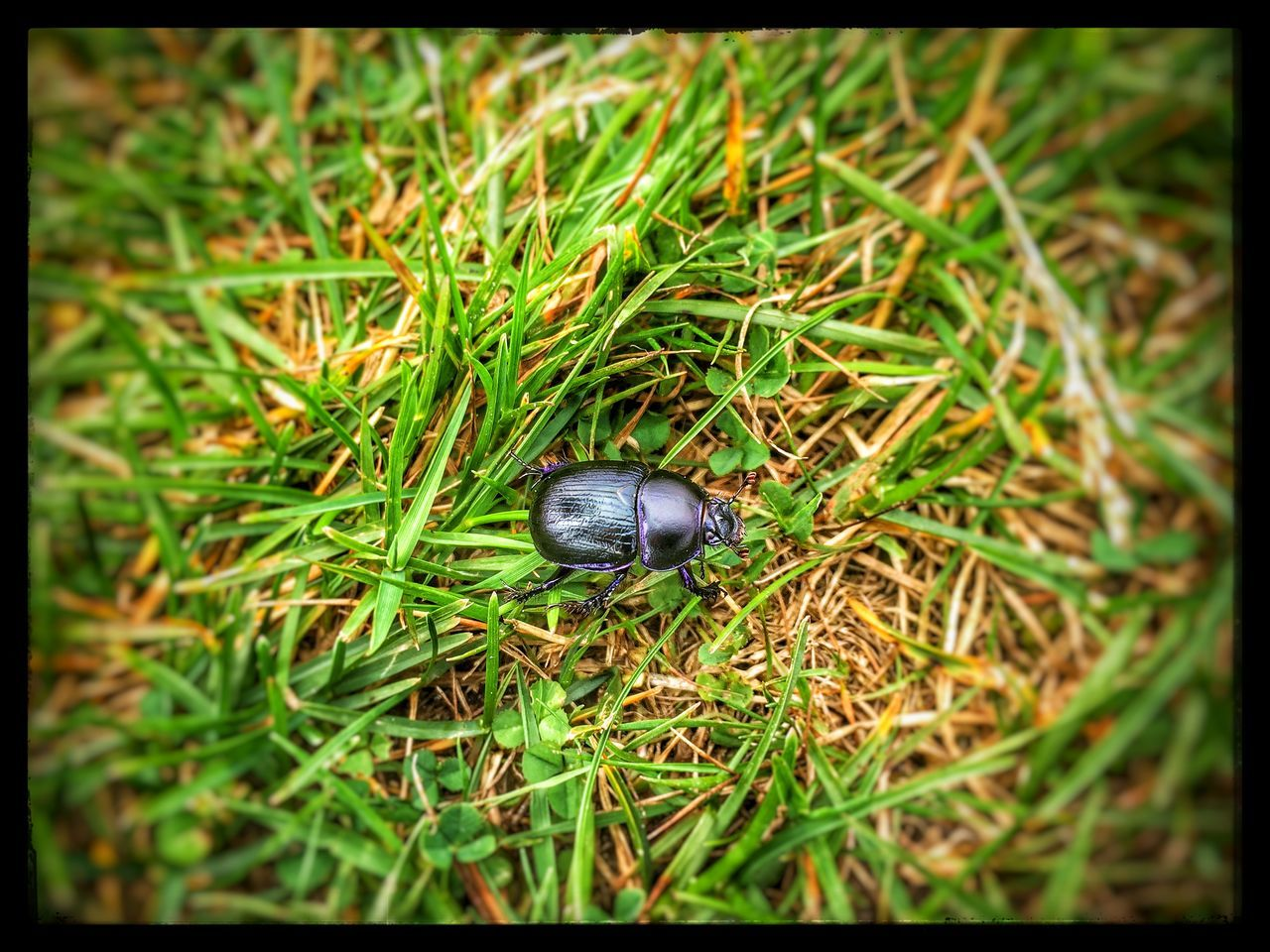 Bugs Taking Photos IPhoneography My View Walking Around EyeEm Nature Lover The EyeEm Facebook Cover Challenge Holiday Holland Summer2015