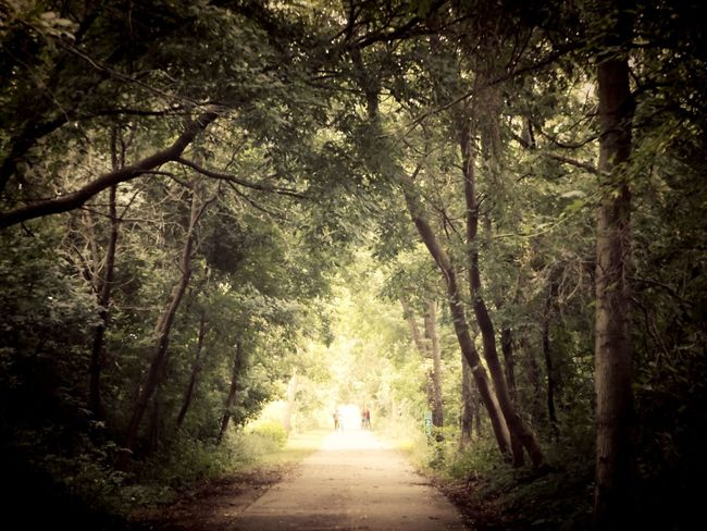 Nature Photography Nature_collection Naturelovers Nature On Your Doorstep Tree Canopy  Bike Trail Bike Ride