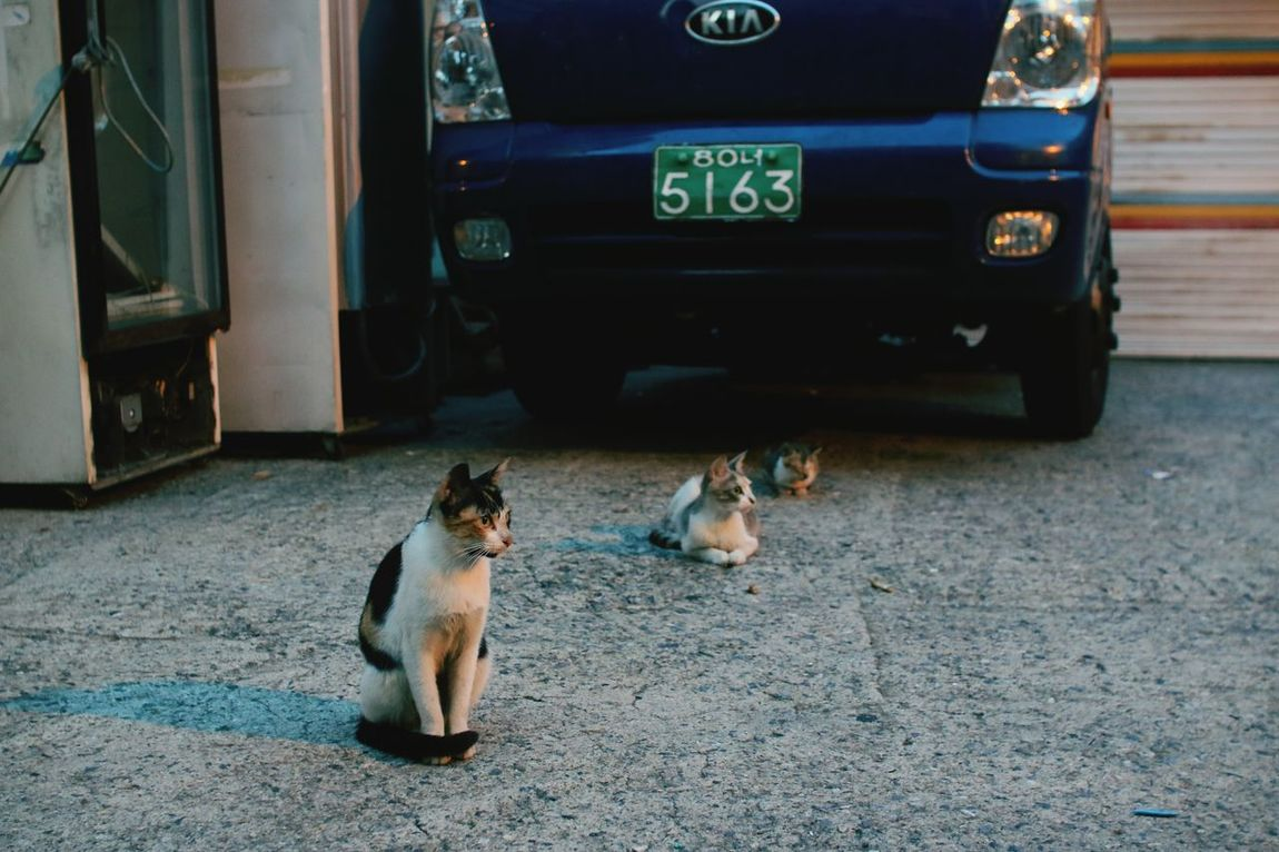Street cat family; Daddy cat, mommy cat and a kitten~ Streetcat Familycat