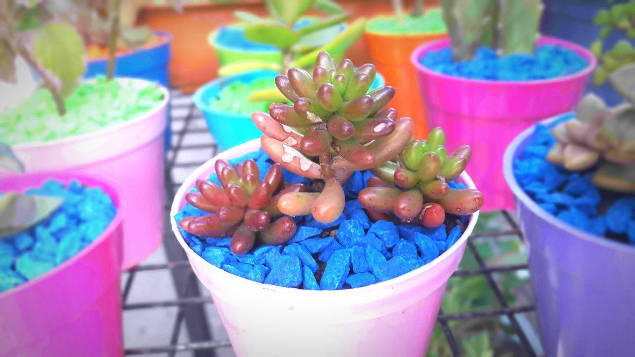 Bonsai Mini Plants Green