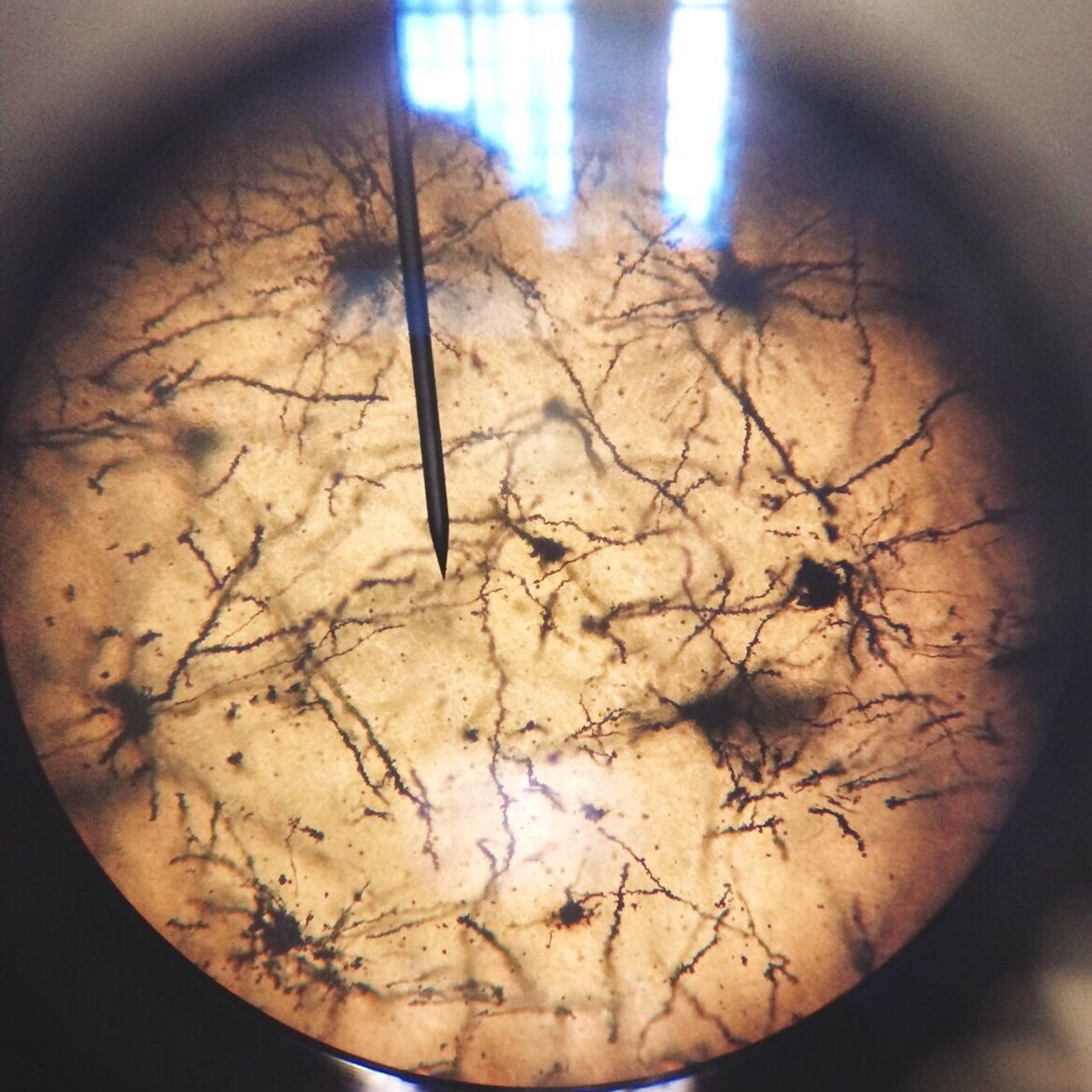 Neurons Neuroscience Microscope